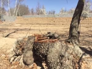 پرونده متهمان قطع درختان روستای مختار یاسوج به دادگاه ارسال شد