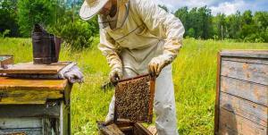 تلفات ۳۰ تا ۴۰ درصدی زنبورهای عسل اردبیل