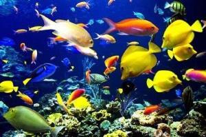 تولید بیش از ۱۳ میلیون قطعه ماهی زینتی در آذربایجانشرقی