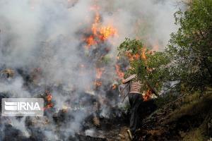 ۳ هکتار از عرصههای جنگلی سنندج دچار آتشسوزی شد
