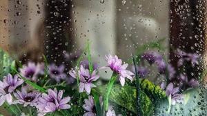 رگبار و بارش باران به استان سمنان میرسد