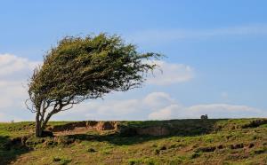 وزش باد و رگبارهای پراکنده برای قزوین پیشبینی میشود