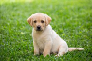 نجات یک سگ ولگرد از یک چاه 20 متری