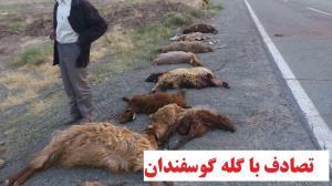 تلف شدن گوسفندان شهرستان خنداب در سانحه رانندگی