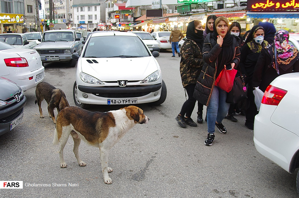 عکس/ پرسه سگها در شهر چالوس!