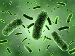 مقابله با باکتریهای مقاوم در برابر دارو به کمک یک پلتفرم جدید