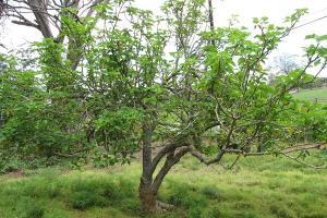 نابودی جان سختترین پروتئین عامل سرطان با ریشه یک گیاه!