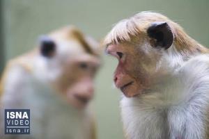از نخستین پرواز در مریخ تا ایجاد جنین انسان - میمون