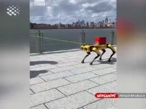 رباتی شبیه به سگ!