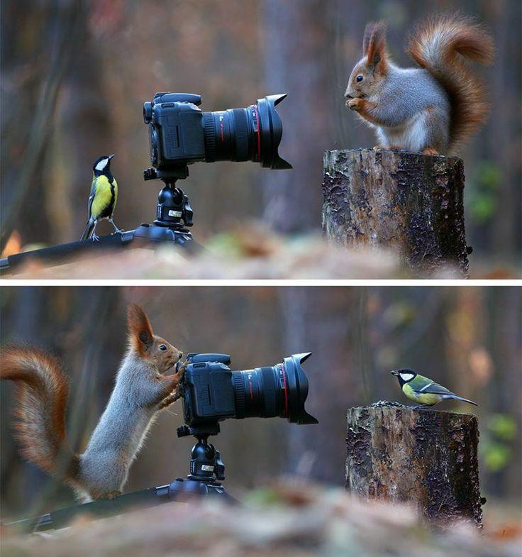 عکاسی سنجاب و گنجشک