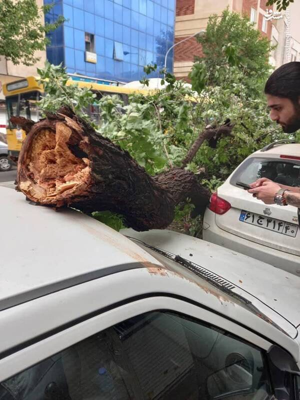 سقوط درخت بر روی پراید