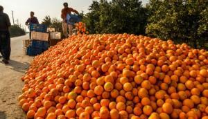 فاسد شدن 30 درصد پرتقال شب عید؛ میوههای تنظیم بازاری روی دست دولت ماند