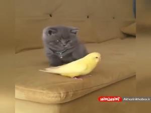 ترس خنده دار گربه از پرنده