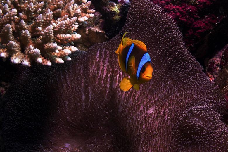 دنیای شگفت انگیز زیر دریا