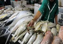 پرسش منتقدان از روحانی درباره قیمت ماهی