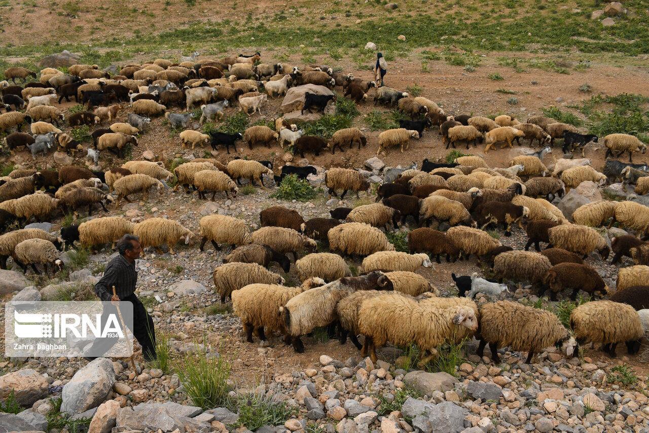 کاهش بارندگیها هزینه تولیدات عشایر خراسان شمالی را افزایش داد