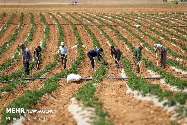 کاهش ۵۶ درصدی بارندگی های قم در سال زراعی جاری