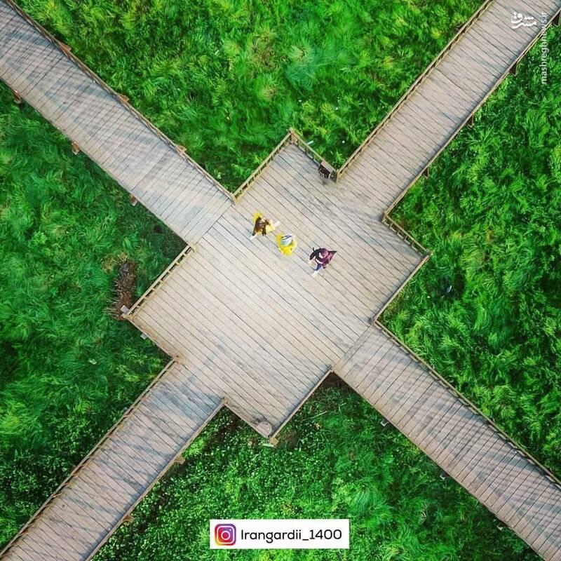 عکس/ پل چوبی زیبای آبکنار