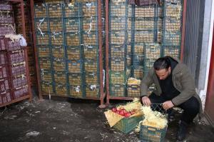 میوههای موجود در انبارهای چهارمحالوبختیاری سالم باقی ماندهاند