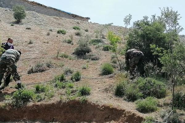 کاشت درخت در بویراحمد به بهانه تصرف منابع ملی