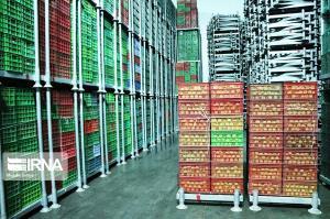 بلاتکلیفی یک هزار تن سیب درختی در سردخانه های خراسان شمالی