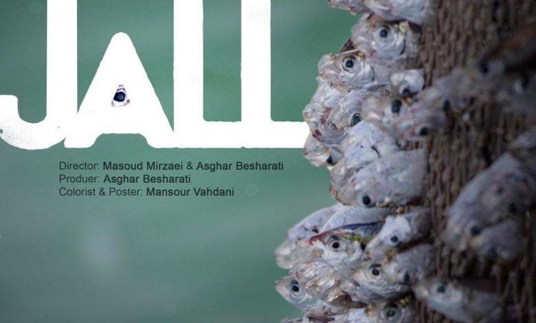 مستند ساز قشمی در جشنواره فیلم کوتاه چین درخشید