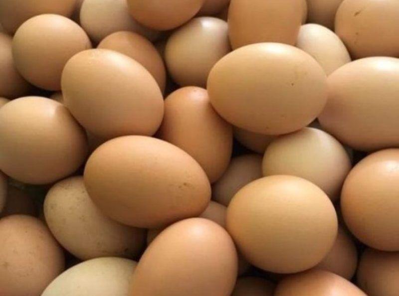کشف ۷.۶ تن تخممرغ فاقد مجوز در میامی
