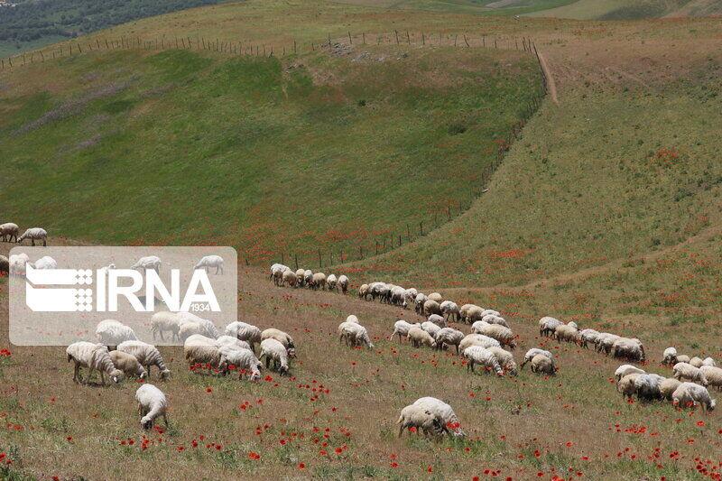 مدیرکل منابع طبیعی: خشکسالی مراتع البرز را با کاهش جدی علوفه روبهرو کرده است