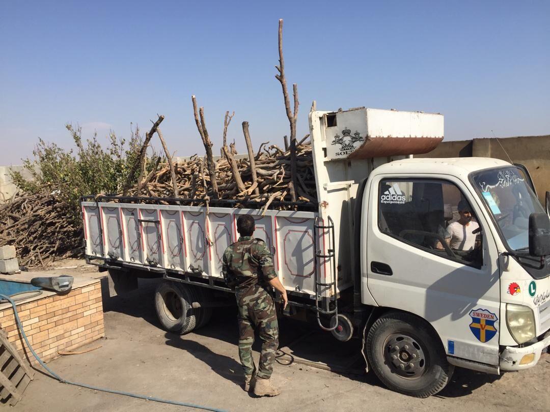 ۴۵ نفر در زمینه قاچاق چوب سال گذشته در استان سمنان دستگیر شدند