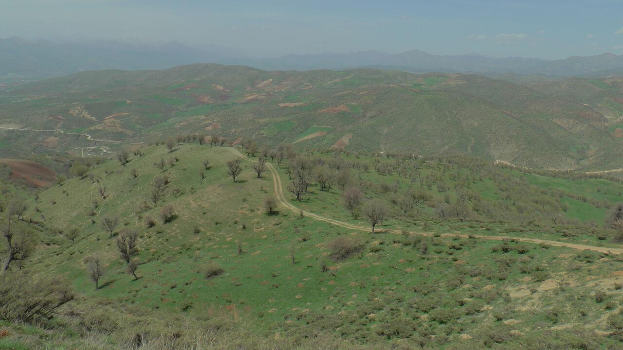 طرح جامع جنگلکاری در قزوین تهیه میشود