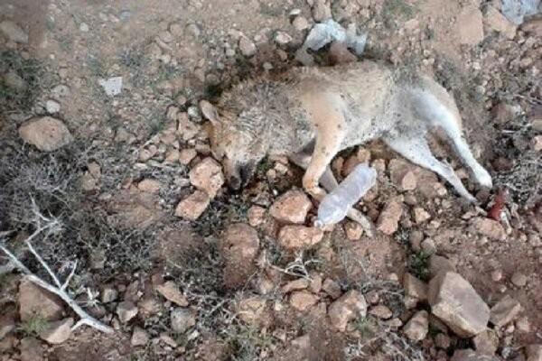 متهم حیوان آزاری در شرق مازندران شناسایی شد