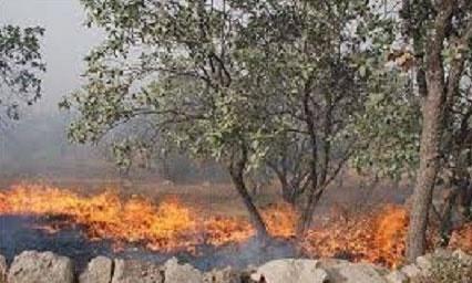 آتشسوزی در منطقه حفاظت شده دیل