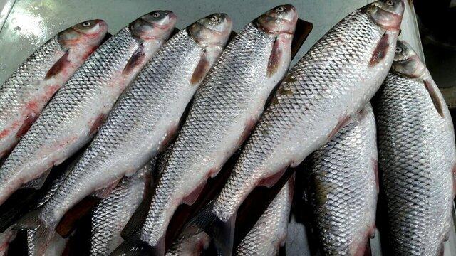 ماهی هم از سفره مردم ارومیه پر کشید