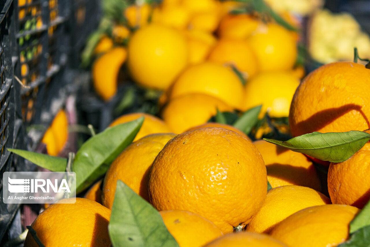 رییس صنف ترهبار کرمان: میوه شب عید روی دست ما مانده است