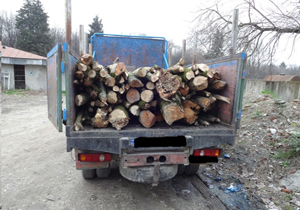 کشف و ضبط ۷تُن چوب قاچاق در محمودآباد
