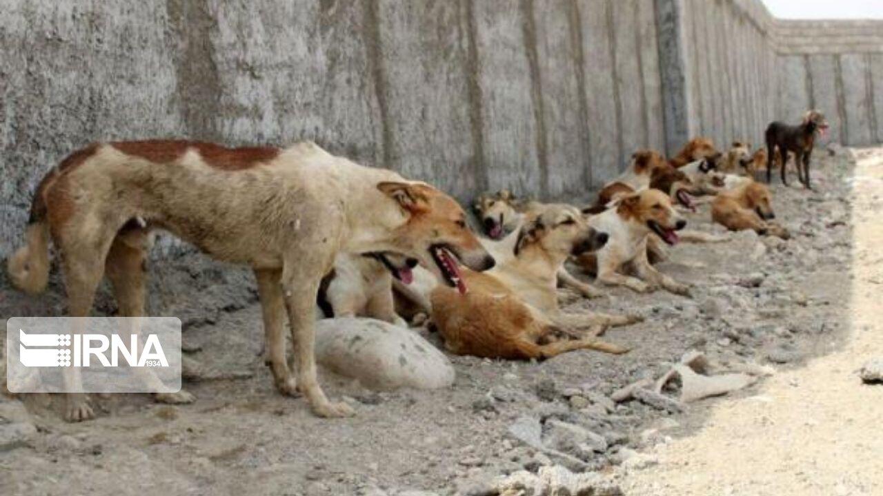 مرکز نگهداری سگهای بدون صاحب در بروجرد ایجاد میشود
