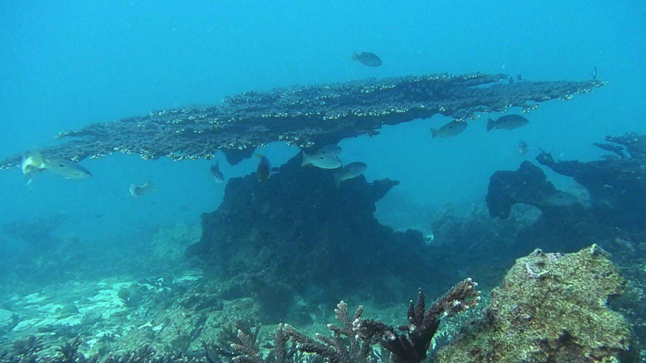 کشف ۵ گونه جانوری جدید در خلیج فارس