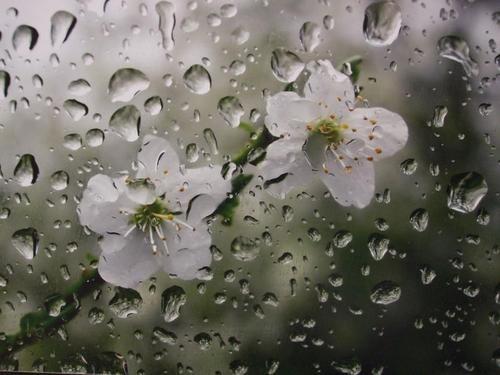 بارش خفیف باران طی امروز در اردبیل