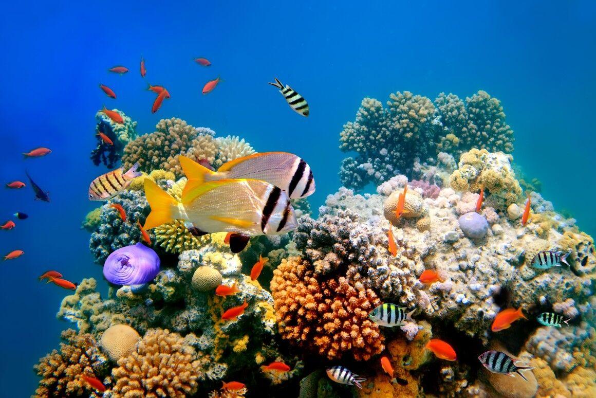 ۶گونه جانوری جدید خلیج فارس ثبت جهانی شد
