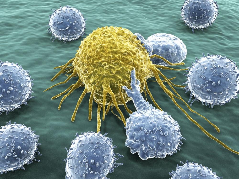 پژوهشگران با دستکاری سلولهای «لنفوسیت تی» میخواهند رشد تومورها را متوقف کنند