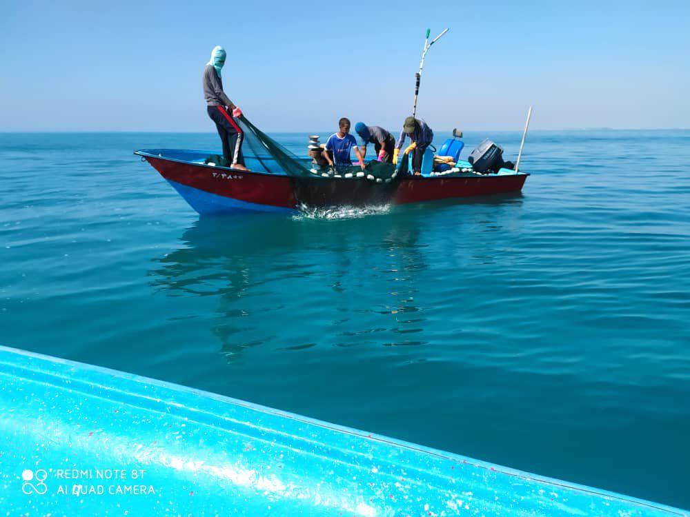 ممنوعیت صید ساردین در آبهای استان بوشهر