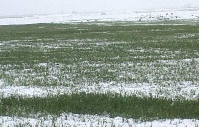 برف بهاری مشگینشهر را سفیدپوش کرد