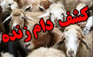 مهار ۳۰۶ رأس دام قاچاق در مرزهای شمالغرب
