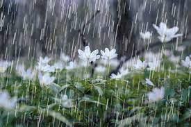 بارش ۱۵ میلیمتری باران در آبادان