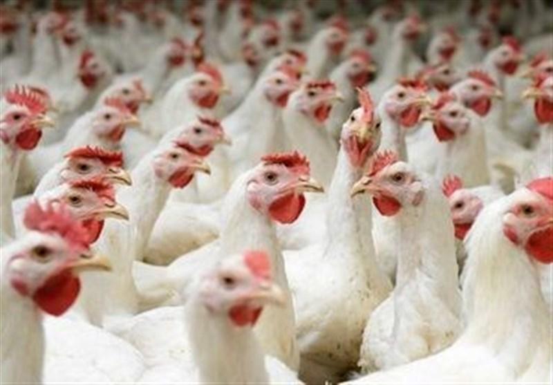 تقاضای مرغ در بازار همدان کاهش یافت