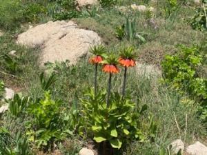 عکس/ طبیعت زیبای شاهو در منطقه اورامانات استان کرمانشاه