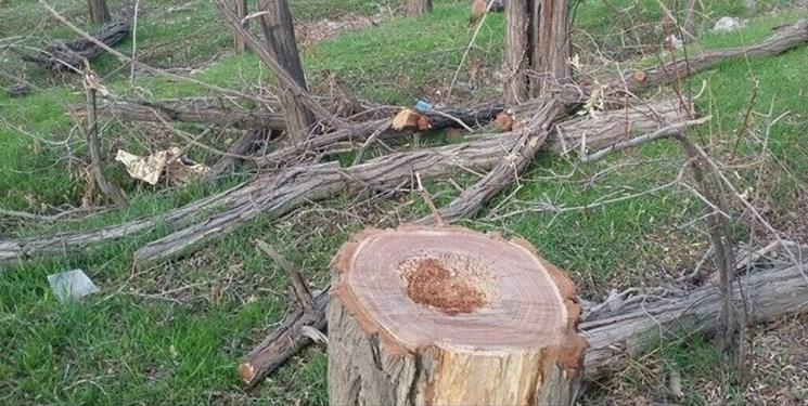 دستهای پشت پرده قطع درختان اردوگاه دانشآموزی قوچان