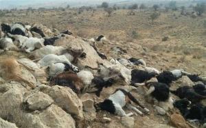 تلفشدن ۳۰ رأس گوسفند بر اثر رعدوبرق