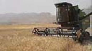 کاهش ۵۰ درصدی محصولات زراعی در پلدختر