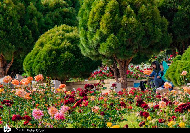 عکس/ ۱۵ اردیبهشت، روز شیراز